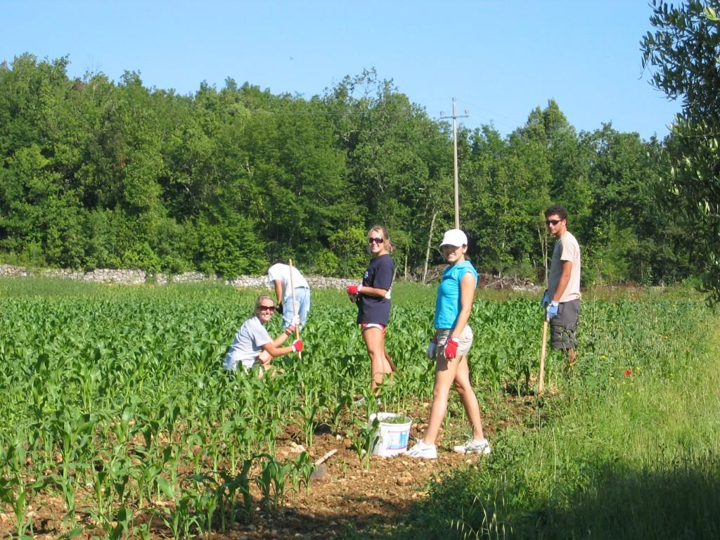 Students tending a garden